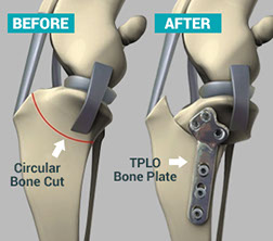 Tplo Surgery Dogs Video